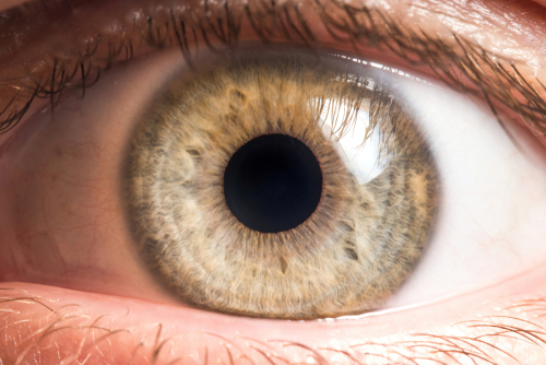 Alzheimer : vos yeux peuvent-ils voir venir la maladie ?